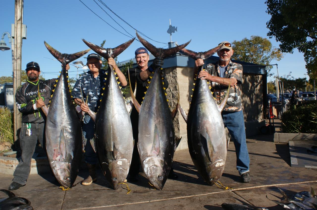 Owner Super Mutu Big Game offshore circle hook shark tuna marlin 9//0